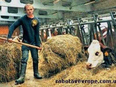 Работа в Чехии на ферме