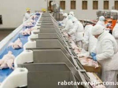 Работа в Германии на курином заводе