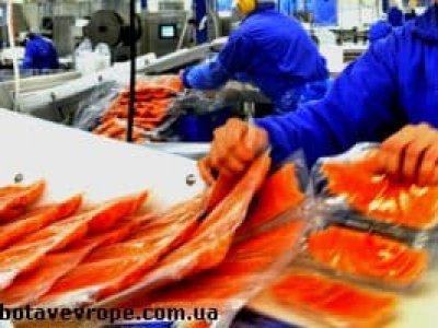 Работа в Норвегии на рыбном заводе