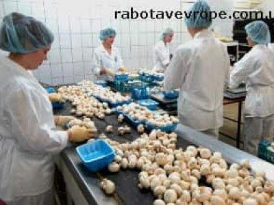 Работа в Польше сбор грибов