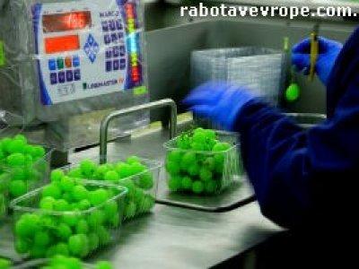 Работа в Польше на сортировке овощей
