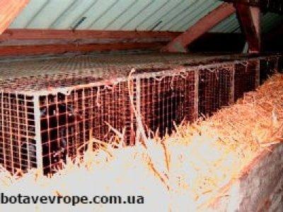 Работа в Польше на ферме норок