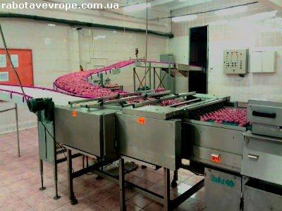 Работа в Польше на куриной фабрике