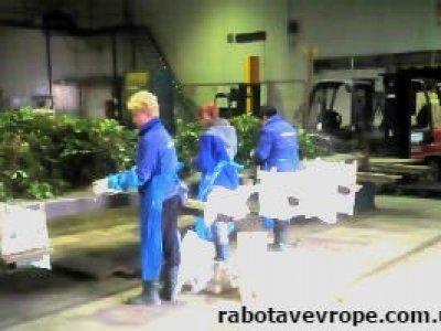 Работа в Польше на сортировке саженцев