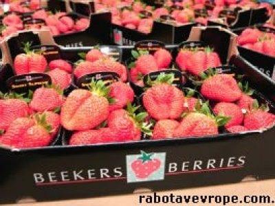 Работа в Испании на упаковке фруктов