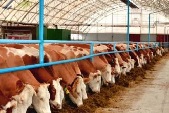 Работа в Словакии на ферме