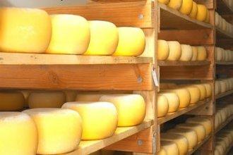 Работа в Словакии на производстве сыра