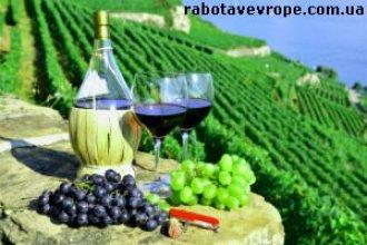 Работа в Словакии на производстве вина