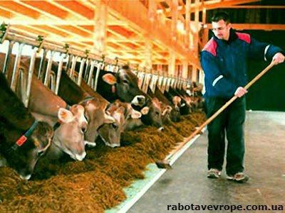 Работа в Хорватии на ферме