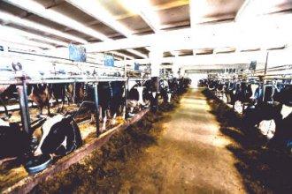 Работа в Литве на ферме коров