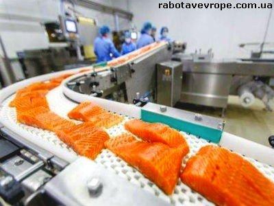 Работа в Польше на обработке лосося