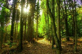 Работа в Швеции на посадке леса