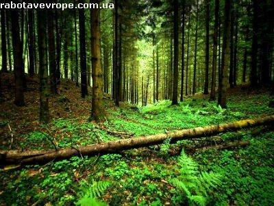 Работа в Чехии на высадке леса