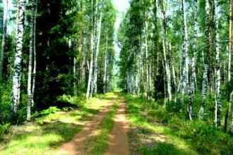 Работа во Франции в лесу