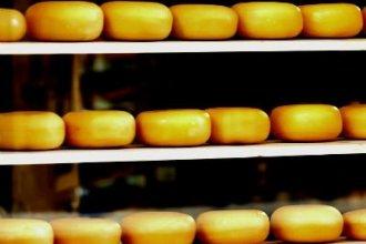Работа в Польше на производстве сыра