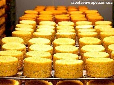 Работа в Чехии на производстве сыра