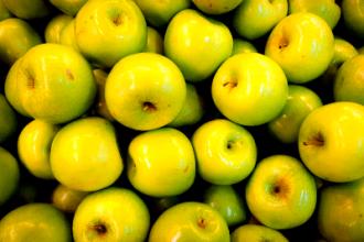 Работа в Чехии на сборе яблок и груш