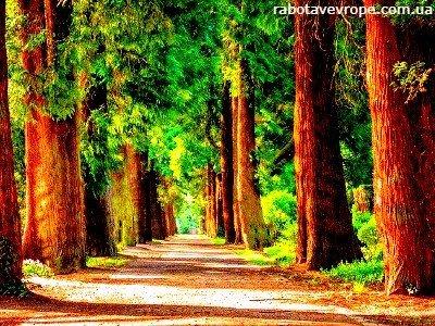 Работа в Германии на уходе за деревьями