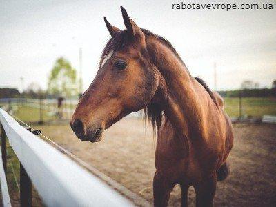 Работа в Германии на уходе за лошадьми