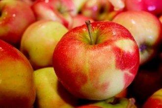 Работа в Голландии на сборе яблок