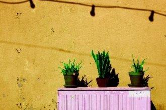 Работа в Голландии на уходе за растениями
