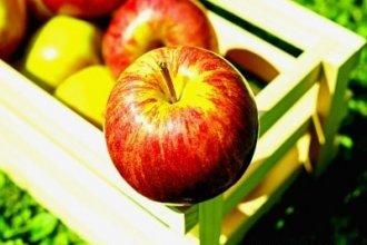 Работа в Литве на сборе яблок