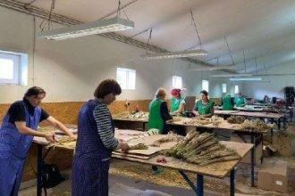 Работа в Польше на создании декоративных растений