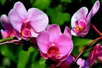 Работа в Польше на уходе за орхидеями